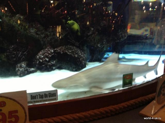 Акула в торговом центре на Cocoa Beach
