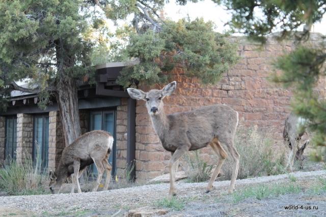 deers02